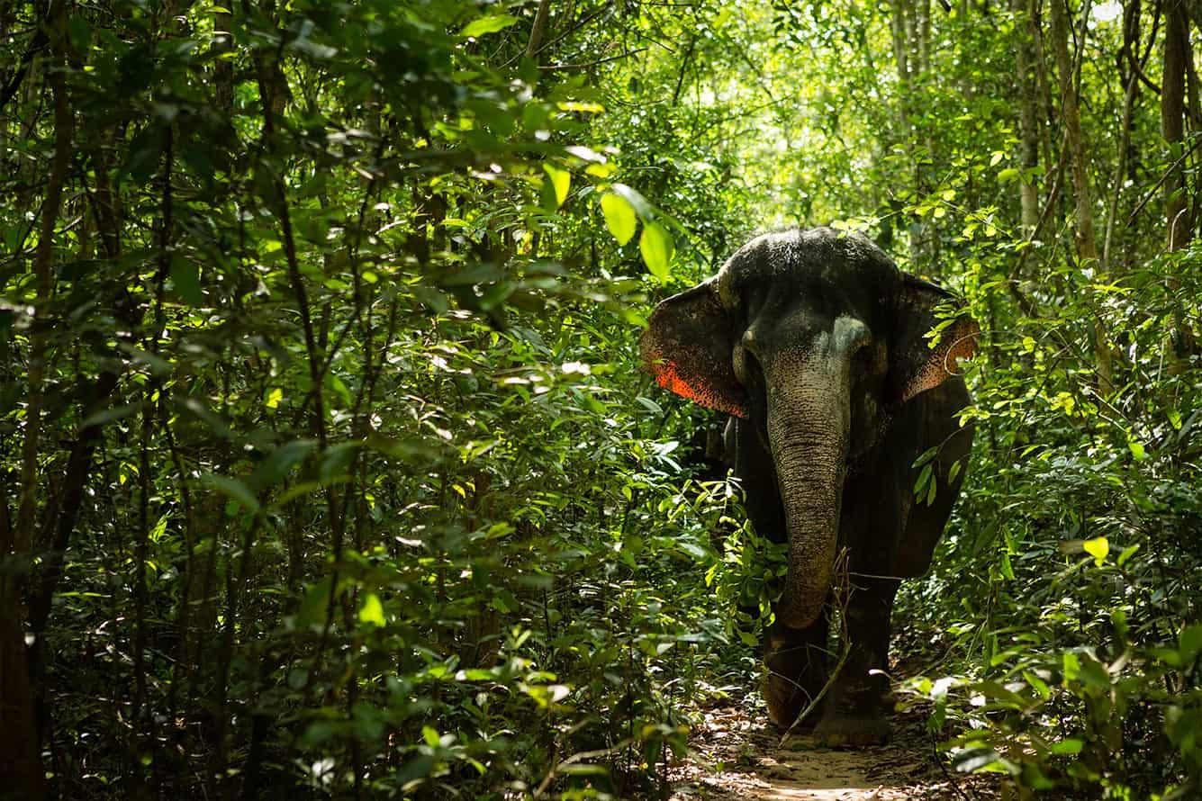 Elephants Conversation in Siem Reap